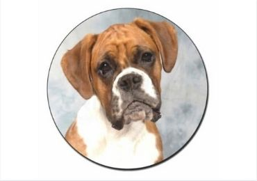 Pet Lover Christmas Magnet manufacturer and supplier in China